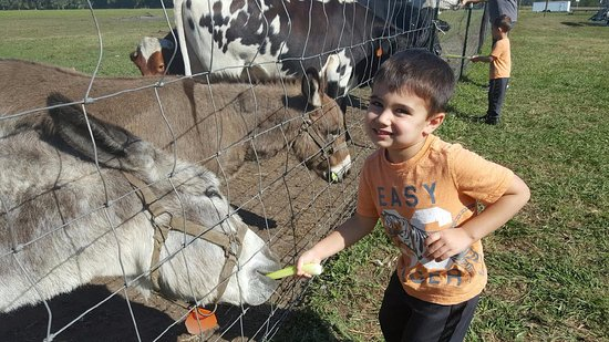 Elkton, Floryda: Friendly animals!
