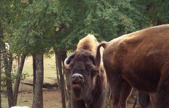 free range animals picture of wild animal safari pine mountain