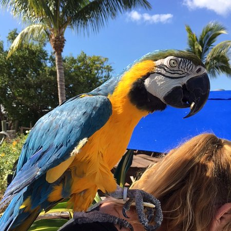 Goodland, Φλόριντα: Pirate the Parrot with cracker