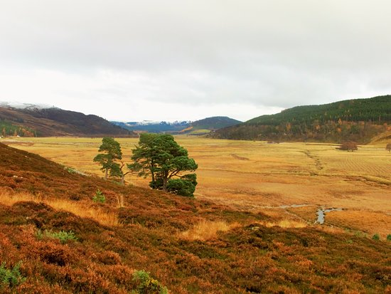Mar Lodge Estate: on the way to the Punchbowl