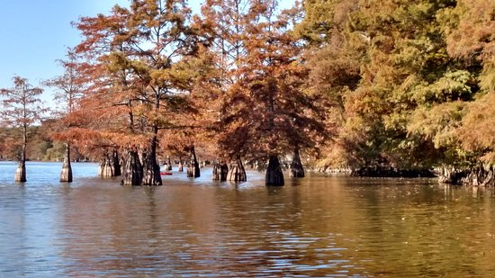 Lake Chicot State Park: Cypress in Lake Chicot