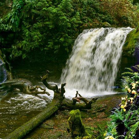 Ladysmith, Canada: Stocking Creek Waterfall