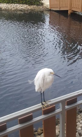 Reese's Restaurant : A Snowy Egret comes to visit for breakfast.