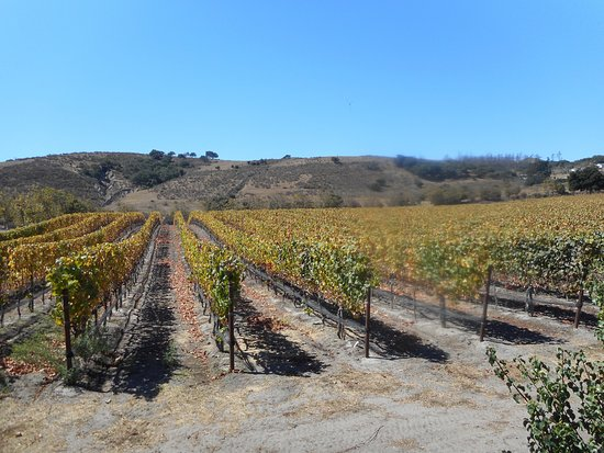 Foley Estates Vineyard & Winery
