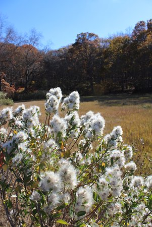 Bluff Point State Park: Seed pods along the trail