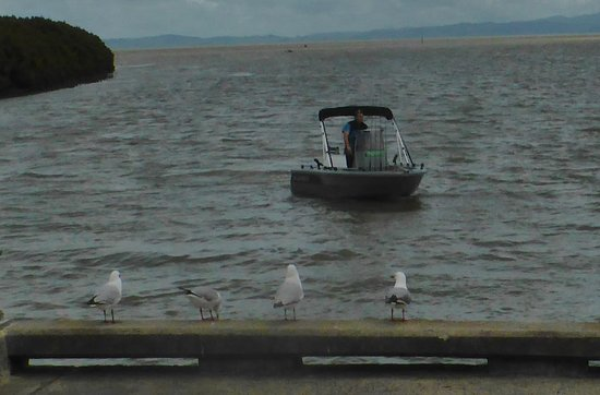 Thames, Nieuw-Zeeland: Seagulls watching the fisherman