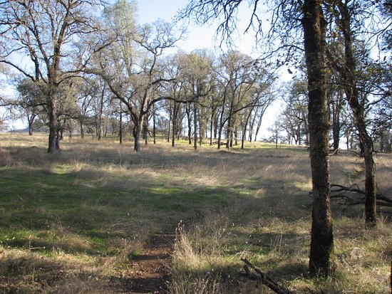 Penn Valley, CA: The meadow at the top of the hike
