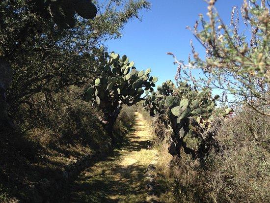 Hiking trail, El Charco del Ingenio