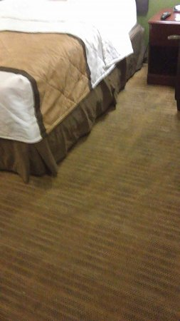 Extended Stay America - Sacramento - White Rock Rd.: no, those arent vaccuum streaks, its from improper rug shampooing that is not done well