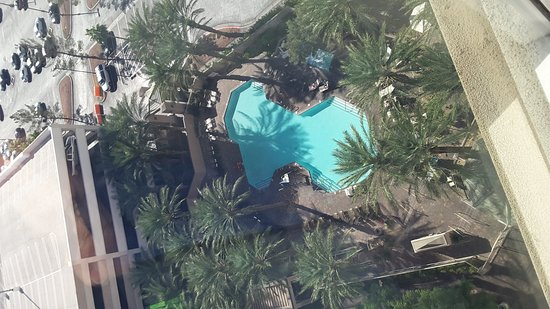 Hilton Grand Vacations on Paradise (Convention Center): Palm tree Nirvana at the HGVC pool