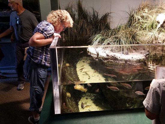 Bristol, RI: an aquarium showing the fish in the local area