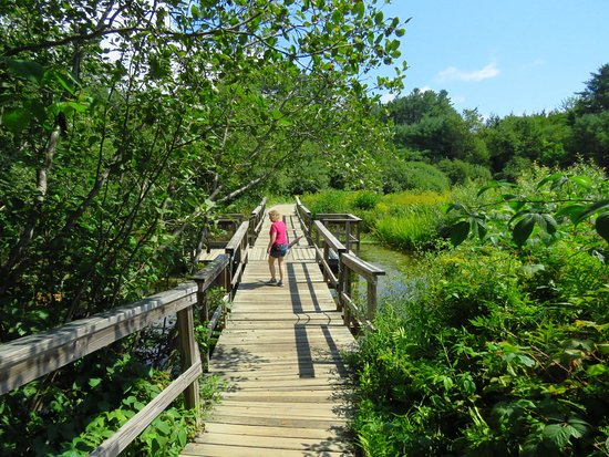 Holderness, Nueva Hampshire: Here's the floating bridge that was the highlight of our time there. A great way to see nature.