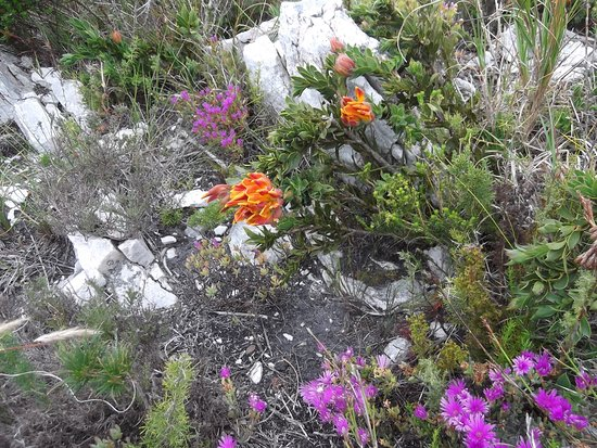 Overberg District, South Africa: Gods rockery at the summit of Ben Lomand