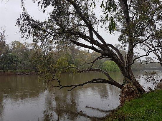 Albury, Australia: Scenic walk along the Murray