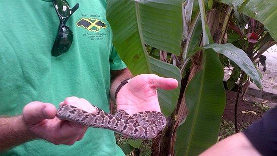 """Résultat de recherche d'images pour """"ferme aux serpents kinshasa"""""""