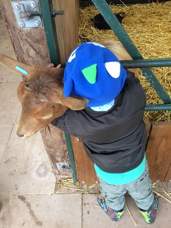 Kington, UK: Child friendly animals to pet