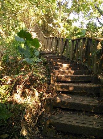 Dakeng No. 6 Healthy Trail
