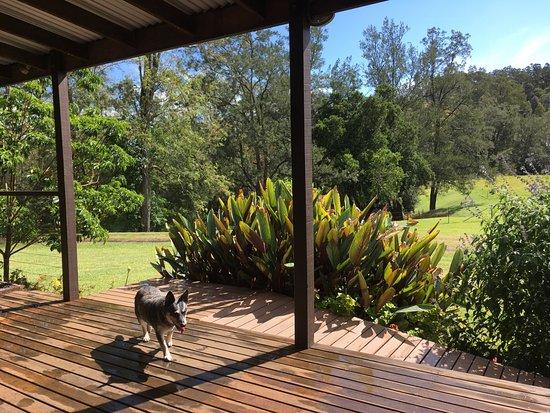 Kyogle, Australia: view from the balcony