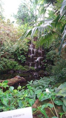 Tanzhalle picture of palmengarten frankfurt tripadvisor for Indoor botanical gardens