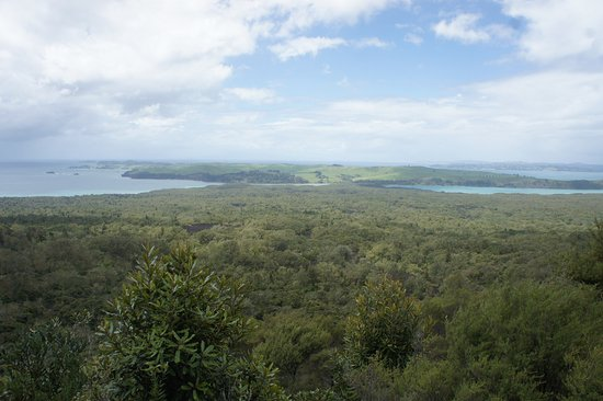 Fullers Rangitoto Volcanic Explorer Tour: photo1.jpg