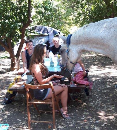 Distriktet Paphos, Cypern: Babulina enjoying a picnic