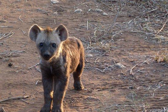 Ngala Private Game Reserve ภาพถ่าย