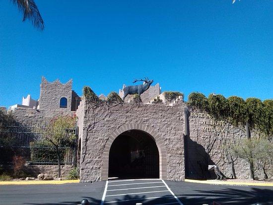 International Wildlife Museum : exterior