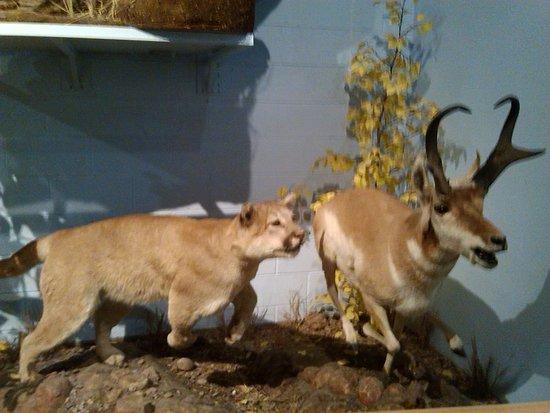 International Wildlife Museum : display