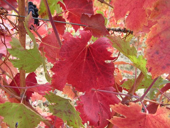 Montespertoli, Italia: Autumn is here