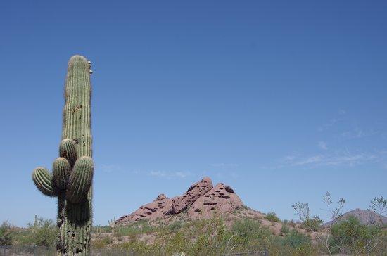 Hole in the Rock, Phoenix AZ, 42 degrees C, September 2016