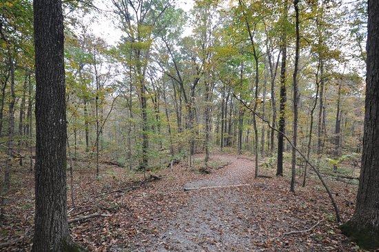 Makanda, IL: thru the woods