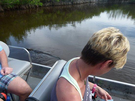 Jungle Erv's Everglades Airboat Tours: Aligator ganz nah