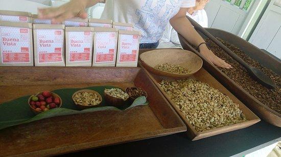 Hacienda Buena Vista : The stages of coffee seeds