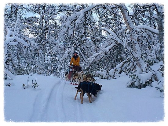 Overkalix, Suécia: Magical Lapland Forests