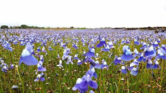 Madayipara: Blue carpet