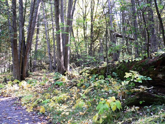 Lindsay, Canadá: trails