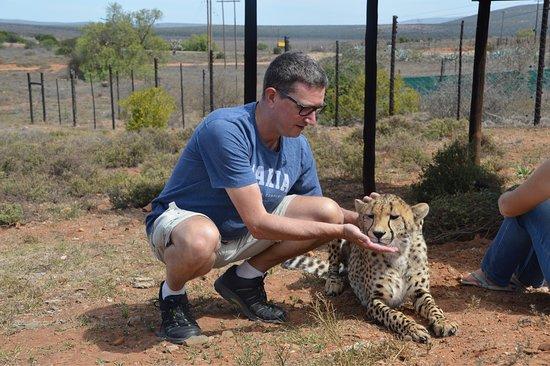 Kirkwood, Afrika Selatan: Oog in oog met twee bijn volwassen Cheeta' s