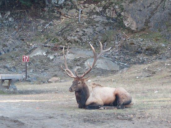 Montebello, Canada: photo3.jpg