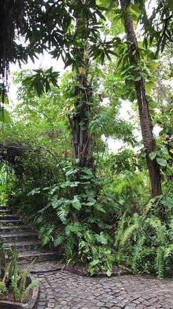 貓頭鷹之家照片