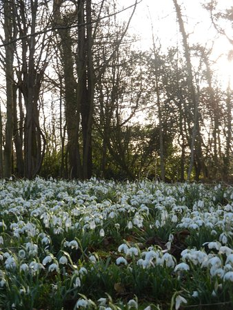 Lytham St Anne's, UK: Snowdrops on a visit last Spring,