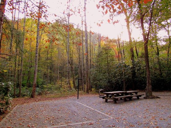 Davidson River Campground
