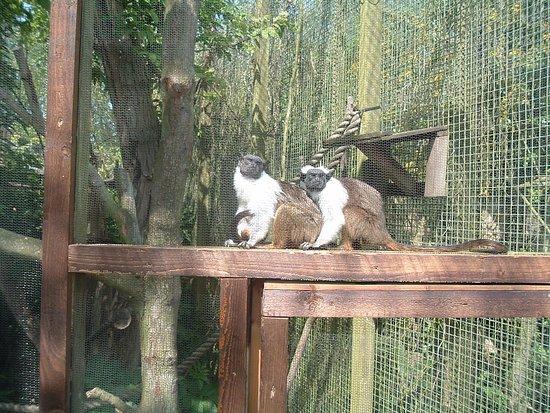 Trinity, UK: Durrell Wildlife Park 14