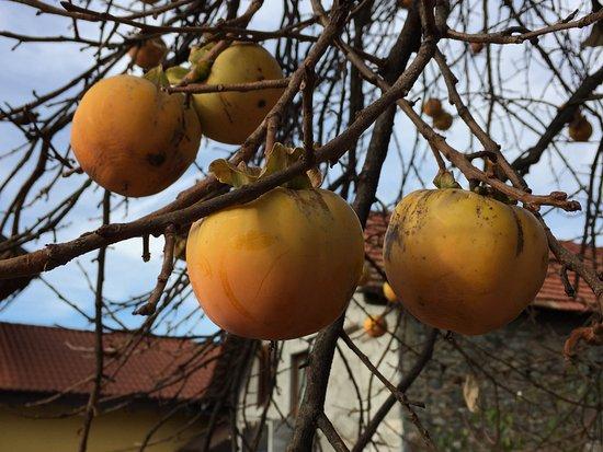 Armeno Photo