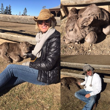 Tabernash, Κολοράντο: we could not get enough of the baby calf, Hally