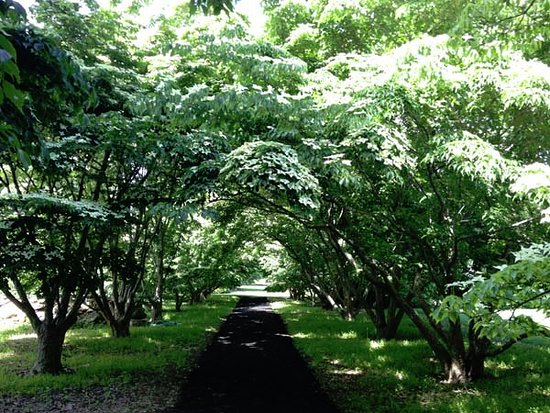 West Tisbury, MA: The dogwood allee is magical and just as beautiful from afar and within.
