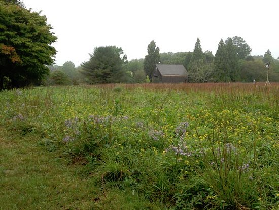 West Tisbury, MA: Maintained open fields honor the agrarian history of Martha's Vineyard.