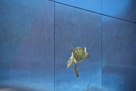 Whaling Wall : sea turtle