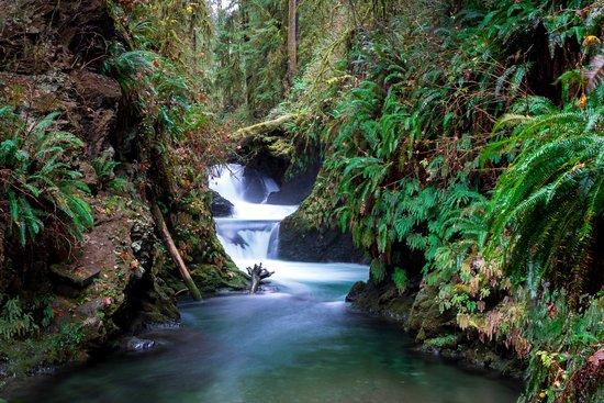Quinault, Etat de Washington : View of Wallaby Creek from the walkway bridge