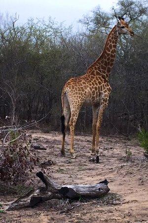 Umkumbe Safari Lodge: photo5.jpg