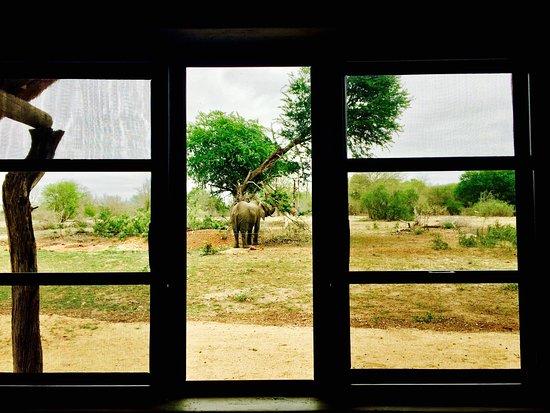 Umkumbe Safari Lodge: photo6.jpg